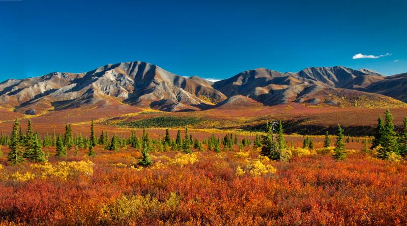 Herbstfarben im Denali Nationalpark