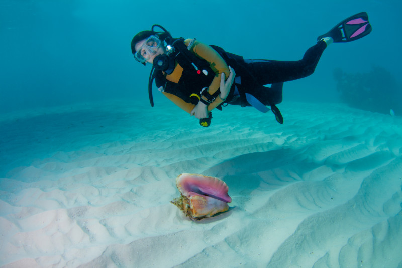 Bahamas, Conch Shell