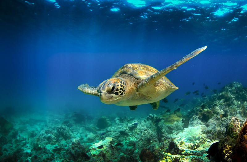 Galapagos-Insel, Tauchen