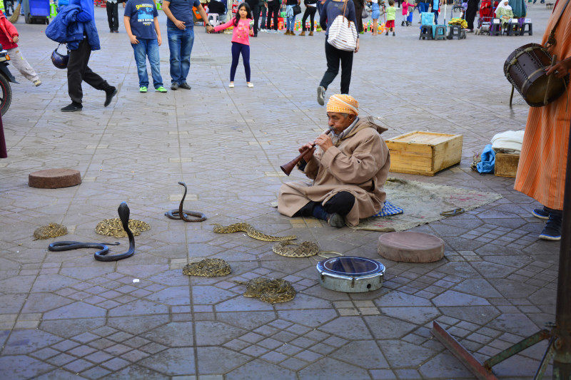 Marrakesch Marokko Schlangenbeschwörung