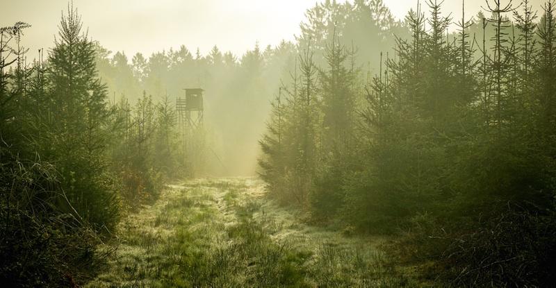 Reiseziel Deutschland, deutscher Wald