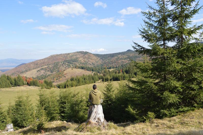 Kraftorte Wälder und Berge