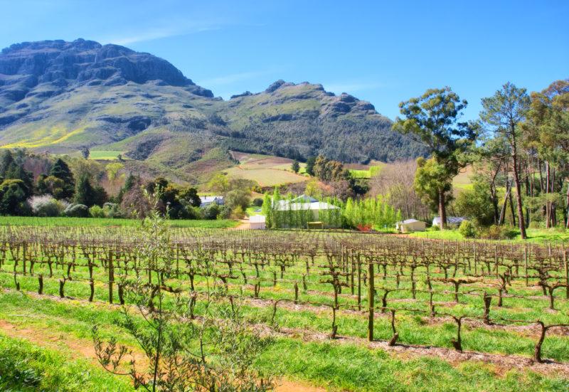 Südafrika, Wineland, Stellenbosch