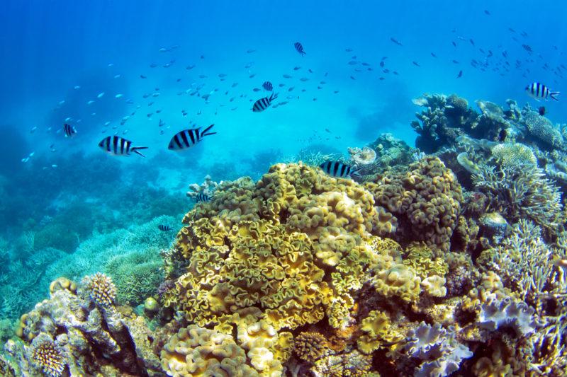 Unterwasserbild Great Barrier Reef