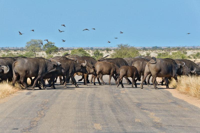 Südafrika, Krüger Nationalpark