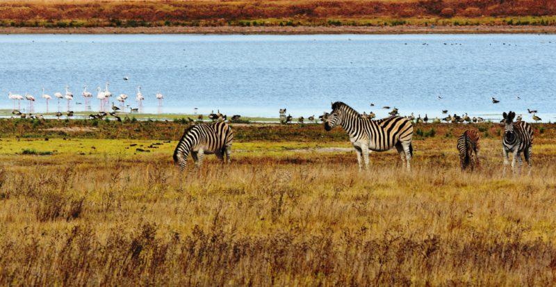 Südafrika, Swartland