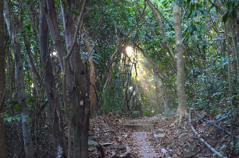 Dschungel Sumatra