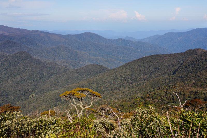 Urwald Sumatra