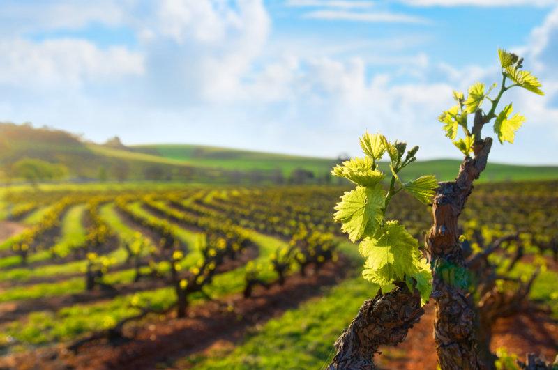 Weintourismus Australien Barossa Valley