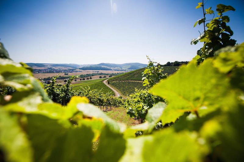 Weintourismus Weinland Nahe