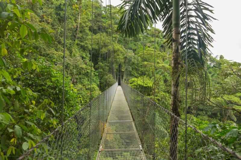 Hängebrücke Urwald Costa Rica