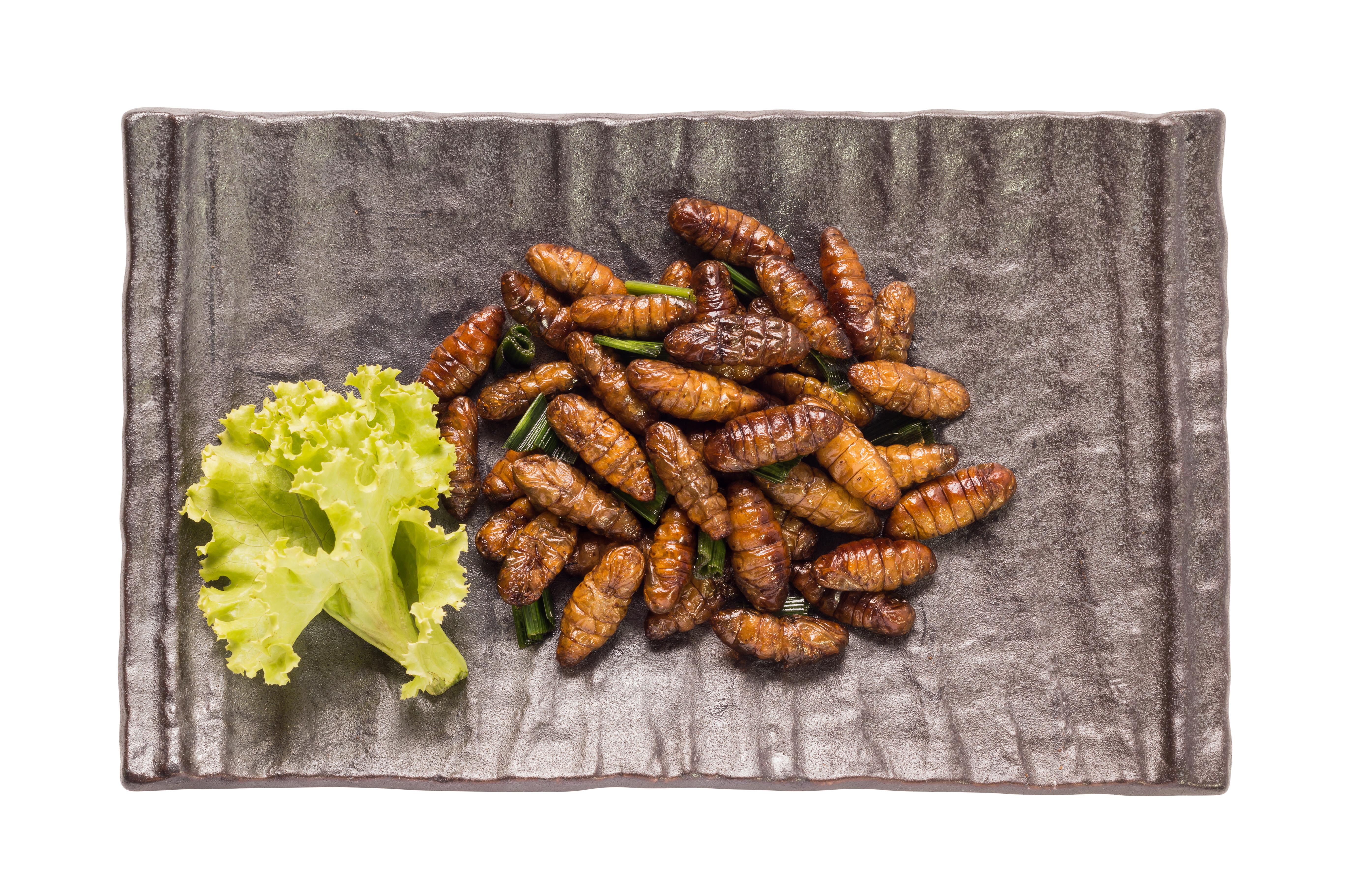 Exotisch Speisen Skorpion