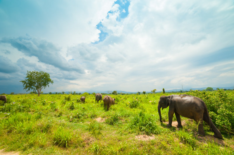 Elefanten in Udawalawe