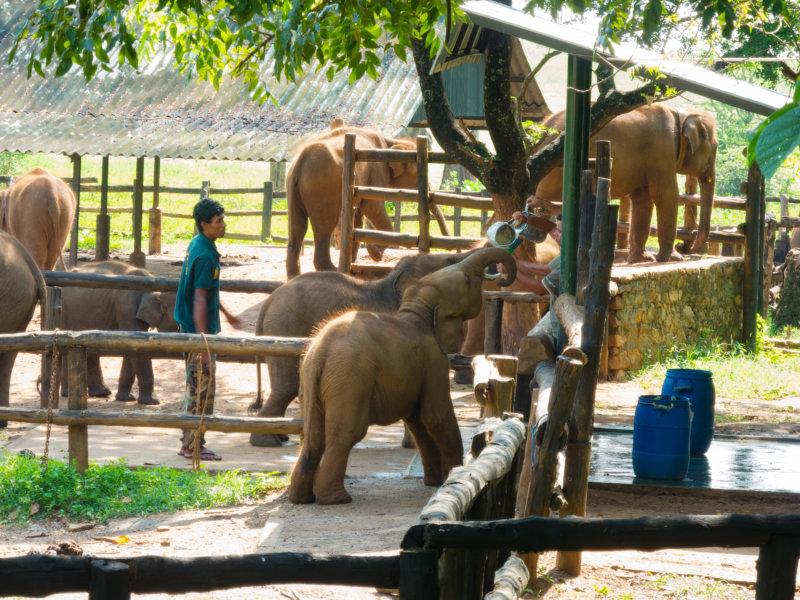 Elefantenweisenhaus in Udawalawe