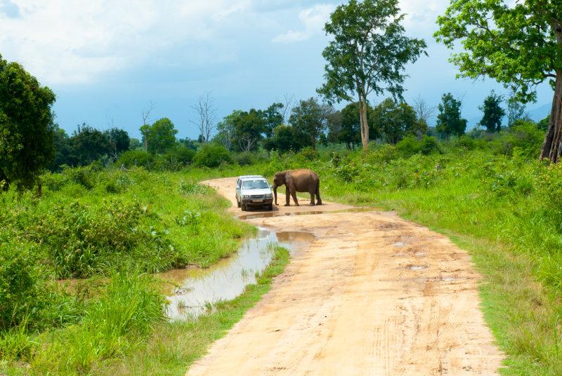 Elefantenbegegnung auf der Straße