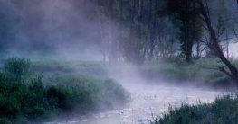 Bialowieza Nationalpark Polen