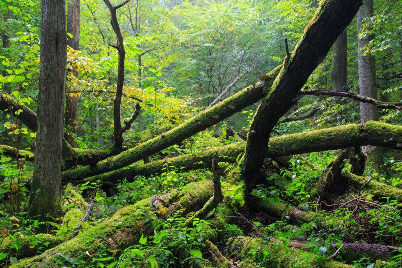 Bialowieza-Nationalpark