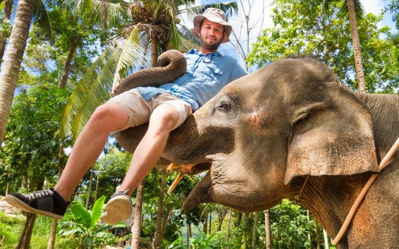 Elefant trägt Mann auf Rüssel