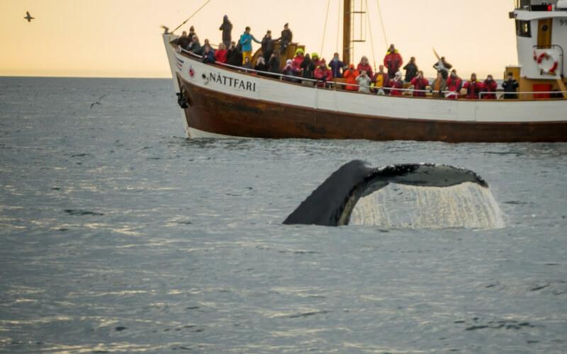 Wal taucht neben Boot ab