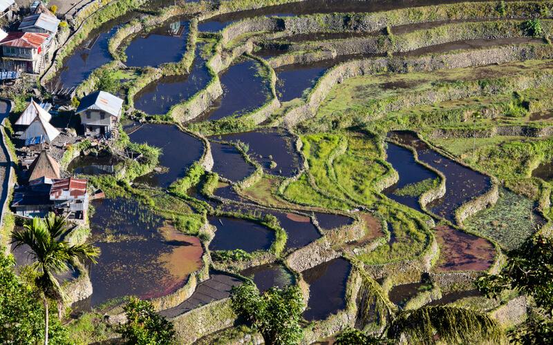 Luzon: Die Reisfelder von Banaue