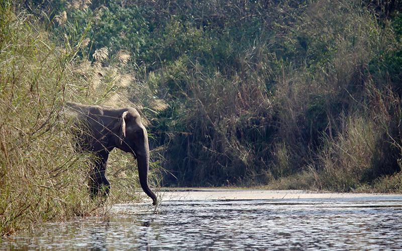 Touristenattraktion Elefanten – Wieso Elefantenreiten so problematisch ist