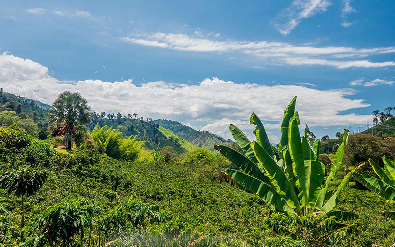 genussreise durch die welt des kaffees, Coffee farm in Manizales, Colombia