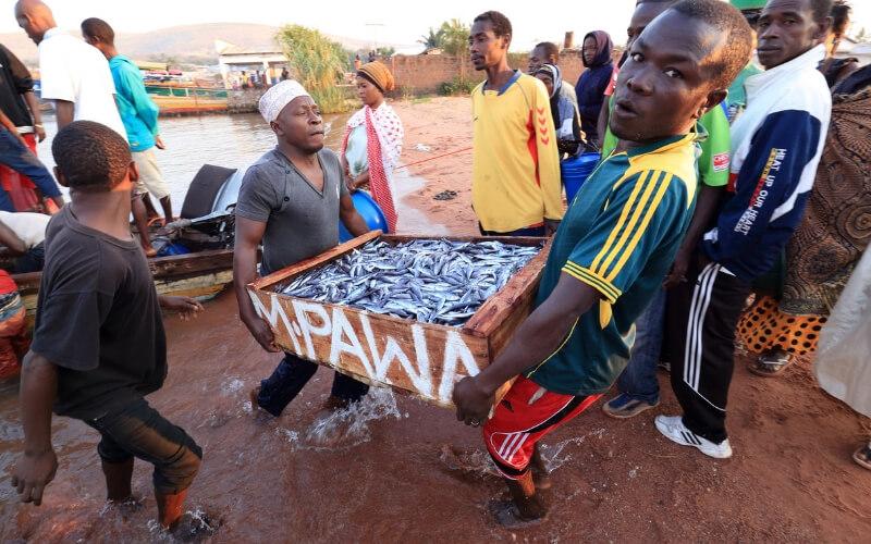 Fischfang im Viktoriasee, Kenia