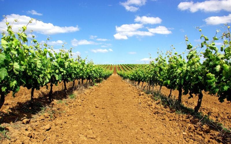 Alentejo und der Wein – Alte Tradition, neue Chance