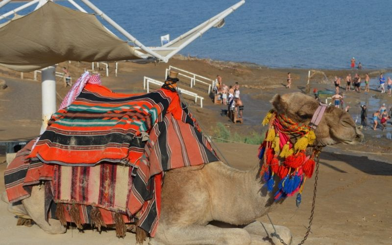 Strandansicht Kamel