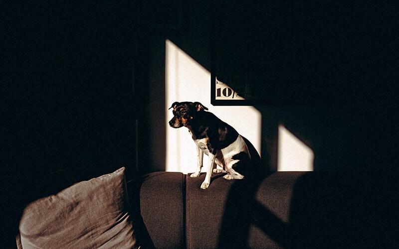 Hund sitzt im Licht auf der Lehne einer Couch